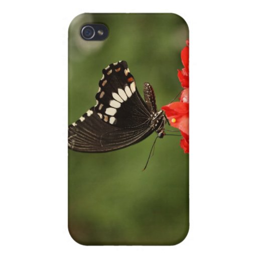 Veined Swallowtail iPhone 4/4S Covers