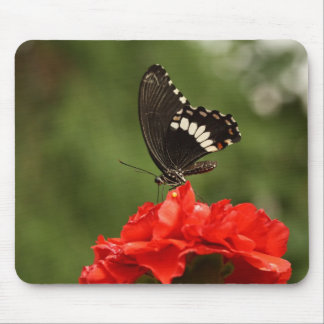 Veined Swallowtail Mouse Pad