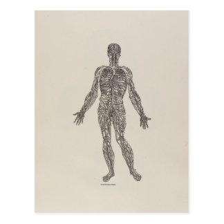 Veins and Arteries Postcard