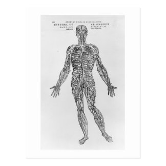 Veins and Arteries system (b/w print) Postcard