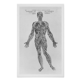 Veins and Arteries system (b/w print) Poster