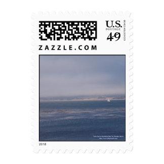Vela a solas en sellos de la bahía de Monterey peq