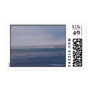 Vela a solas en sellos del medio de la bahía de Mo