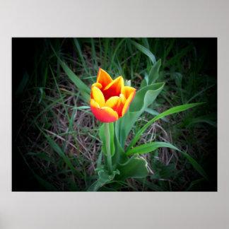 Vela en la oscuridad por la flor brillante del póster