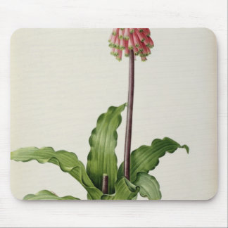 Veltheimia Capensis, from `Les Liliacees', c.1805 Mouse Pad
