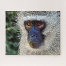 Velvet Monkey. Jigsaw Puzzle