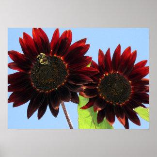 Velvet Queen Sunflowers Poster