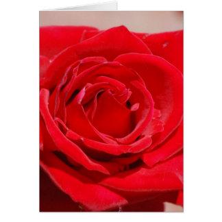 Velvet Red Rose Card
