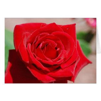 Velvet Red Rose Greeting Card