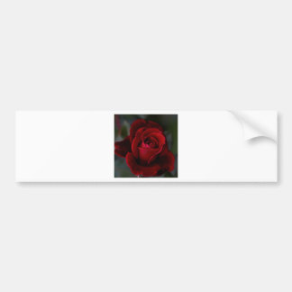 Velvet Red Rose of Romance Bumper Sticker