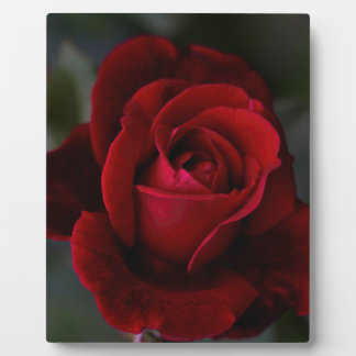 Velvet Red Rose of Romance Plaque