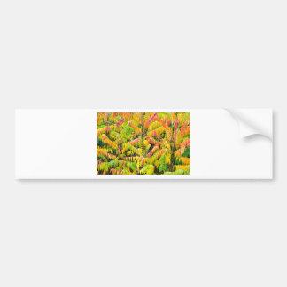 Velvet tree in autumn colors bumper sticker