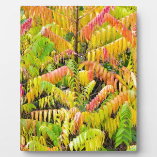 Velvet tree in autumn colors plaque