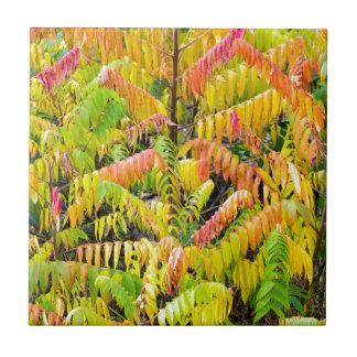 Velvet tree in autumn colors tile