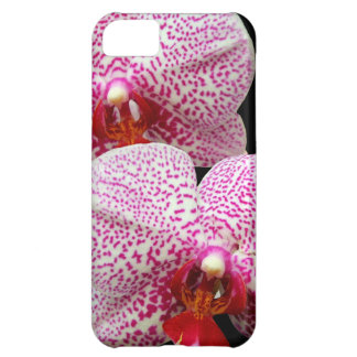 Velvety Magenta Spotted Orchids on Black Case For iPhone 5C
