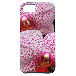Velvety Magenta Spotted Orchids on Black iPhone 5 Case