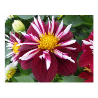Velvety Red Flower Postcard