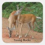 Venado de cola blanca de Young Buck Pegatina Cuadrada
