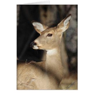 Venado de cola blanca Notecard - esconda dentro Tarjeta Pequeña
