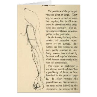 Venas de la anatomía el | del vintage del brazo tarjeta pequeña
