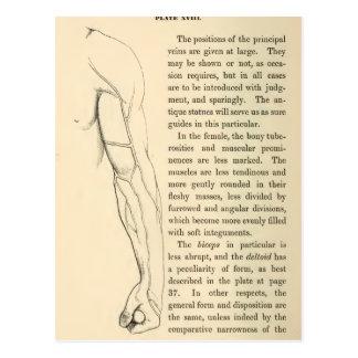 Venas de la anatomía el | del vintage del brazo tarjeta postal