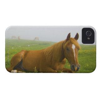 veneto italy 2 iPhone 4 case