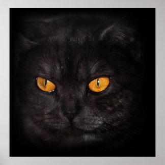 venezia Cat poster