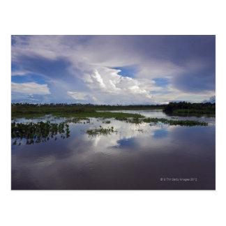 Venezuela, Delta Amacuro, Orinoco Delta Postcard