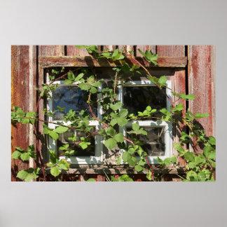 Ventana Overgrown Póster