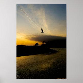 ventura california sunset and seagull poster