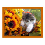 Venus, Baby Maine Coon Kitten Cat Leaning Forward Post Card