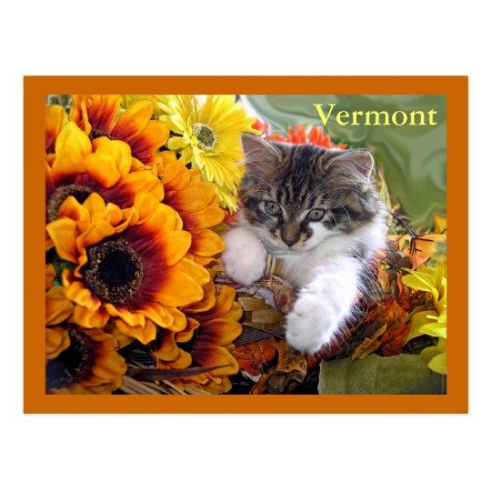Venus, Baby Maine Coon Kitten Cat Leaning Forward Postcard