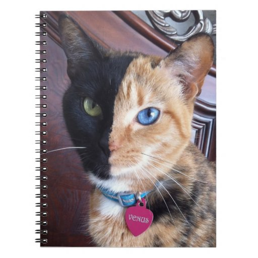 Venus Cat spiral notebook