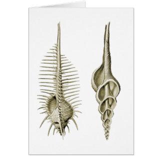 Venus Comb + a spindle snail Card