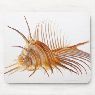 Venus Comb Murex shell (Murex pectin) against Mouse Pad