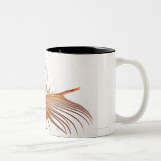 Venus Comb Murex shell (Murex pectin) against Two-Tone Coffee Mug