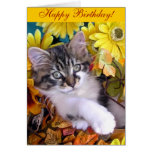 Venus, Cute Maine Coon Kitten Cat, Paws Crossed Cards
