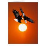Venus en tránsito con dos águilas felicitación