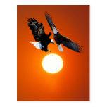 Venus en tránsito con dos águilas tarjeta postal