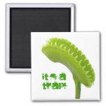 Venus Fly Trap Fridge Magnets