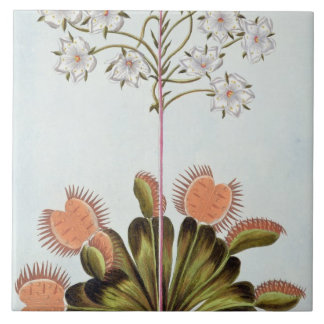 Venus Fly-trap, plate 84, from 'Collection Precieu Ceramic Tile