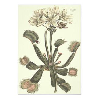 Venus Flytrap Botanical Illustration Card