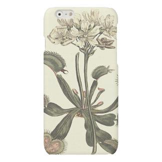 Venus Flytrap Botanical Illustration Matte iPhone 6 Case