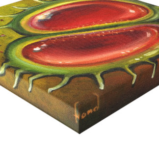 Venus Flytrap Stretched Canvas Prints