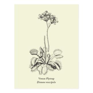 Venus Flytrap, Carnivorous Plant Post Card