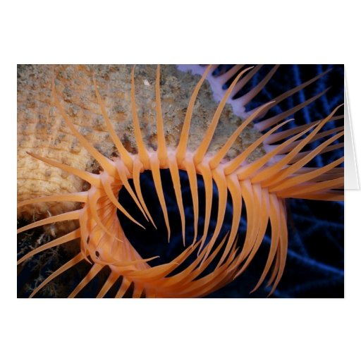 Venus Flytrap Sea Anemone Card