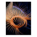 Venus Flytrap Sea Anemone Post Card