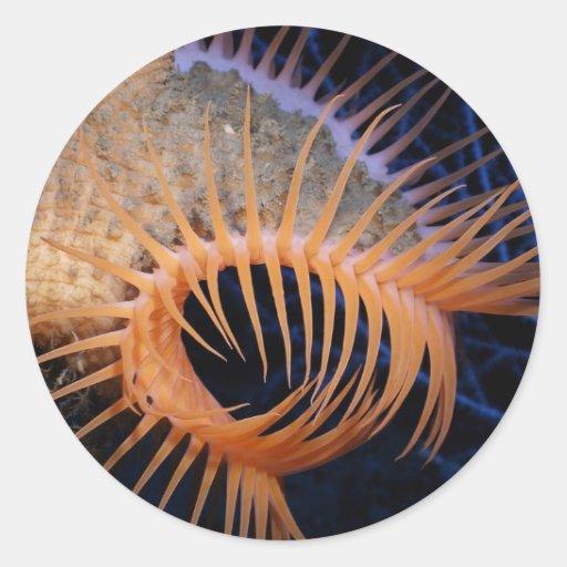 Venus Flytrap Sea Anemone Round Sticker