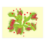 Venus Flytrap with Hearts Post Cards