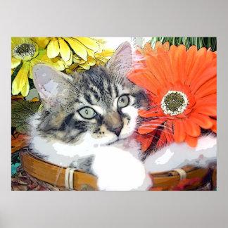 Venus, gato adorable del gatito del Coon de Maine, Posters